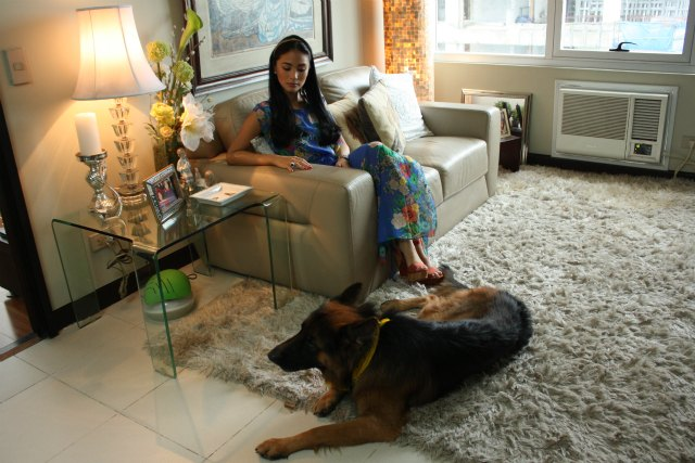7 pets that live more comfortably than most Filipinos