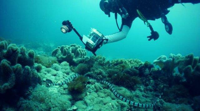 History at 52 meters deep: The shipwrecks of Malapascua