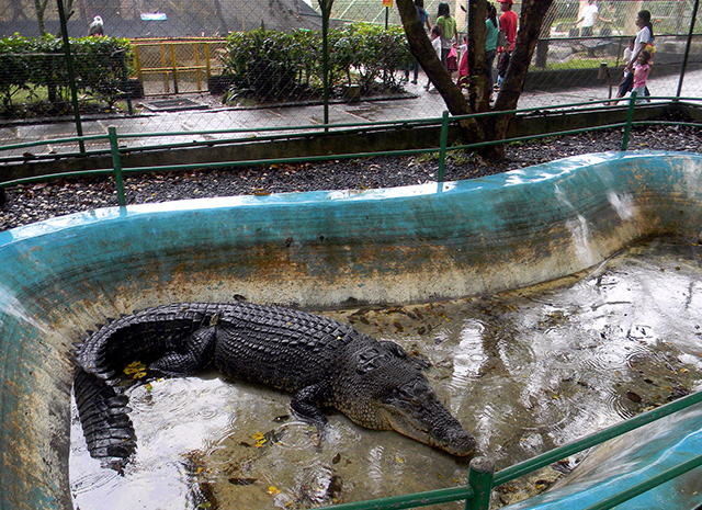 'Pangil' replaces 'Lolong' as PHL's biggest living croc ...